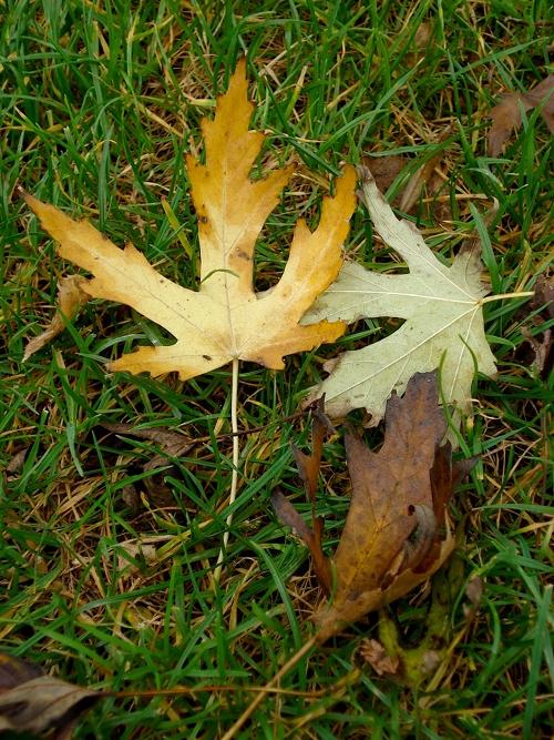 Feuilles d'automne - 28 10 06