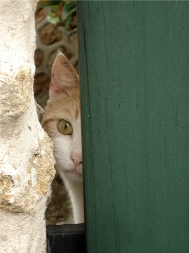 Chat curieux - 03 09 07