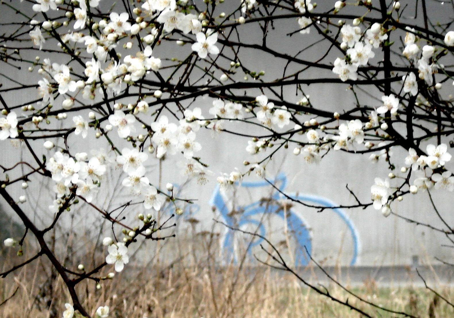 Fleurs d'épine 19 02 07