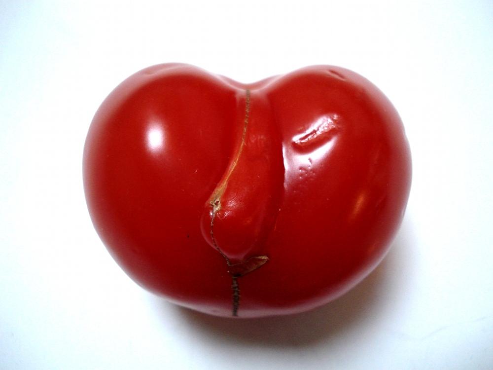 Tomate - 16 04 11