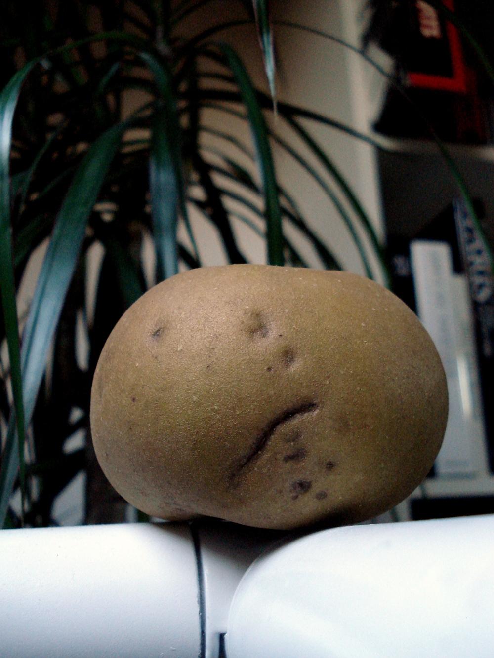 Pomme déprimée - 28 09 11